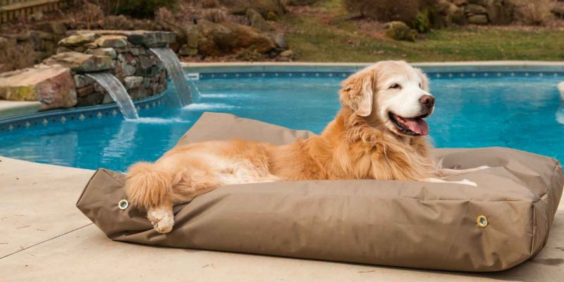 Best Backpacking Dog Bed of 2020