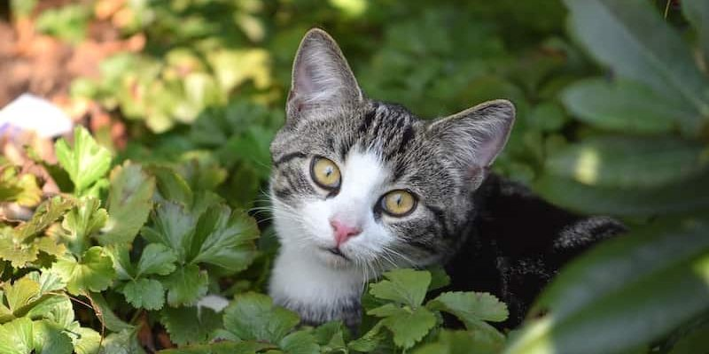 Can I Bring My Cat When Camping?