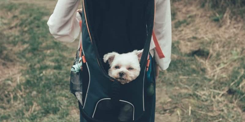 Can Puppies Go Camping?